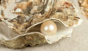Pearl_and_Oyster